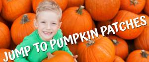 Small Pumpkin Jump To